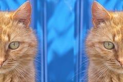 Obdachlose rote Katze, die auf einem blauen Hintergrund sitzt Lizenzfreies Stockfoto