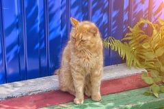 Obdachlose rote Katze, die auf einem blauen Hintergrund sitzt Stockfotos