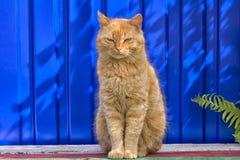 Obdachlose rote Katze, die auf einem blauen Hintergrund sitzt Lizenzfreie Stockfotos