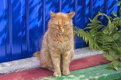 Obdachlose rote Katze, die auf einem blauen Hintergrund sitzt Stockfoto