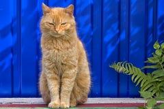 Obdachlose rote Katze, die auf einem blauen Hintergrund sitzt Lizenzfreie Stockfotografie