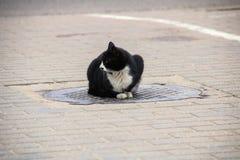 Obdachlose schwarze Katze, die oben auf der Luke, Abschluss sitzt lizenzfreie stockbilder