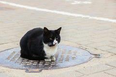 Obdachlose schwarze Katze, die oben auf der Luke, Abschluss sitzt stockfotografie