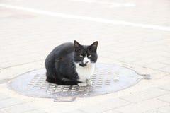 Obdachlose schwarze Katze, die oben auf der Luke, Abschluss sitzt stockfotos