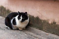 Obdachlose schwarze Katze mit weißem Brustsitzen lizenzfreie stockbilder