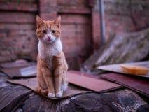 Obdachlose traurige Katze auf einem Backsteinmauerhintergrund stockbild