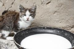 Obdachlose Wildkatzen auf schmutziger Straße in Asien Stockbilder