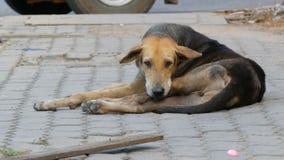 Obdachloser braun-schwarzer Hund liegt auf Straße in Thailand stock footage