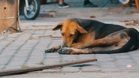 Obdachloser braun-schwarzer Hund liegt auf Straße in Thailand stock video