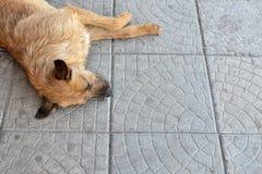 obdachloser Hund Stockbilder