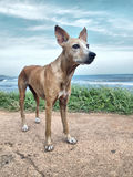Obdachloser Hund Stockfoto