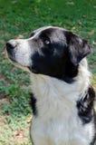 Obdachloser Hund Lizenzfreies Stockfoto