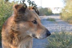 Obdachloser Hund Stockfotos