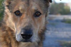 Obdachloser Hund Lizenzfreie Stockfotos