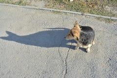 Obdachloser Hund Stockfotografie