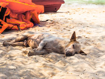 Obdachloser Hund auf dem Strand Lizenzfreie Stockfotos