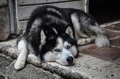 Obdachloser Hund auf der Straße Stockfotografie