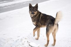 Obdachloser Hund auf Schneehintergrund lizenzfreie stockfotos