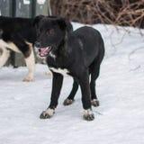 Obdachloser Hund, der an der Schneestraße bleibt Im Freienfoto Stockfoto