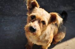 Obdachloser Hund, der oben schaut Lizenzfreies Stockfoto