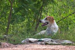 Obdachloser Hund, der Schatten von der Nachmittagssonne findet Lizenzfreie Stockfotografie