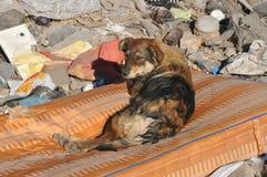 Obdachloser Hund mit traurigen Augen auf der Müllkippe lizenzfreie stockbilder