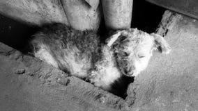 Obdachloser Hund schlafend sehr glücklich Lizenzfreie Stockfotografie