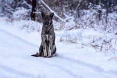 Obdachloser Hund, Winter im Schnee Lizenzfreie Stockfotografie
