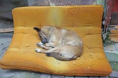 Obdachloser Hundeschlaf Lizenzfreies Stockfoto