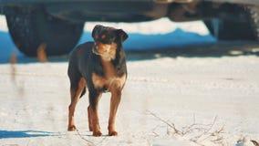 Obdachloser Hundewinter kalt obdachloses Tierhaustierproblem brauner Hundelebensstil im Schnee stock footage