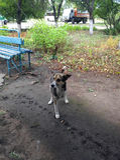 Obdachloser, legless Hund - ungültig stockfotos