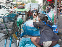 Obdachloser mit einem Hund Stockfotos