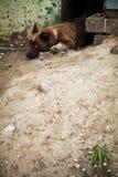 Obdachloser netter kleiner Welpenbastard Einsamer streunender Hund Stockfotos