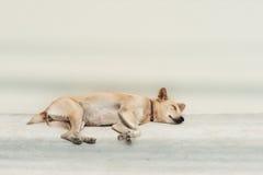 Obdachloser Schlafenhund Lizenzfreie Stockfotografie