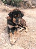 Obdachloser schwarzer streunender Hund Stockbilder