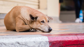Obdachloser streunender Hund Stockfotografie