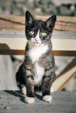 Obdachloses Kätzchen mit traurigen Augen Stockbild