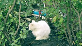 Obdachloses weißes Katzensitzen stock video