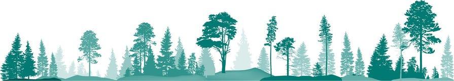 Obdziera z wysokim jedlinowych drzew lasem odizolowywającym na bielu fotografia royalty free