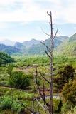 Obebott landskap från nationalparkSkadar sjön Arkivbilder