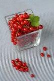 obecna czerwony Fotografia Stock