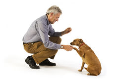 Obediência do treinamento imagens de stock royalty free