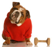 Obedience trained dog Stock Photo