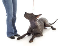 Obedience training Royalty Free Stock Photo