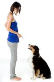Obedience Training Stock Photos