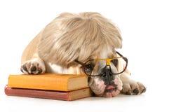 Obediencia del perro Imagen de archivo