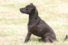 Obedient Black dog Royalty Free Stock Images