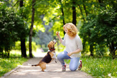 Obedient pet with his owner practicing jump command. Young woman with Beagle dog in the summer park. Obedient pet with his owner practicing jump command Royalty Free Stock Images