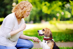 Obedient pet with his owner practicing paw command. Young woman with Beagle dog in the summer park. Obedient pet with his owner practicing paw command Stock Photography