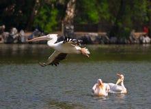 obehörigt flyg Royaltyfri Fotografi